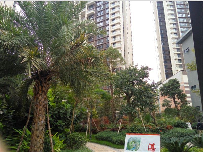 推推99深圳房产网上合花园外景图